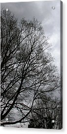 Winter Trees Number Three Acrylic Print by Paula Tohline Calhoun