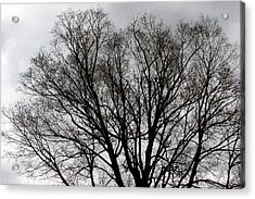 Winter Trees Number Two Acrylic Print