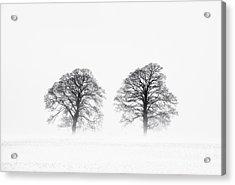 Winter Pine Trees Acrylic Print by Tim Gainey