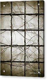 Winter Trellis Acrylic Print by Edward Fielding