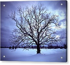 Acrylic Print featuring the photograph Winter Twilight Tree by Jaki Miller