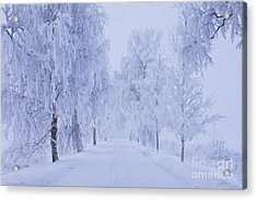 Winter Acrylic Print by Veikko Suikkanen