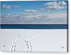 Winter Walks Acrylic Print by Kyra Savolainen