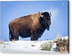 Acrylic Print featuring the photograph Winter Warrior by Jack Bell
