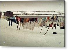 Winter Wash Day Labrador Acrylic Print by Douglas Pike