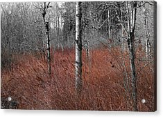 Winter Wetland Acrylic Print