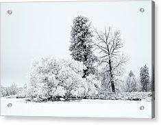 Winter White Acrylic Print by Mike  Dawson