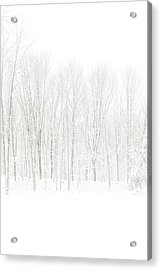 Winter White Out Acrylic Print by Karol Livote