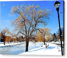 Winter Willow Acrylic Print by Frozen in Time Fine Art Photography