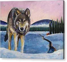 Winter Wolf Acrylic Print by Harriet Peck Taylor