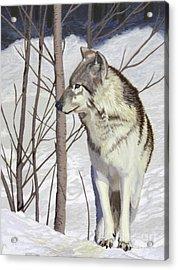 Winter Wolf Acrylic Print