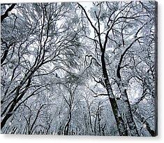 Winter Wonder Acrylic Print by Jeff Klingler