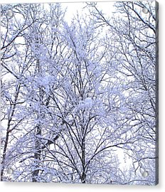 Acrylic Print featuring the photograph Winter Wonderland by Candice Trimble