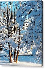 Winter Wonderland Acrylic Print by Judy Via-Wolff