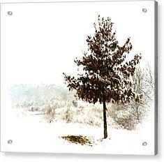 Winter Wonderland  Acrylic Print by Kerri Farley