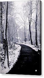 Winter Wonderland Acrylic Print by Martin Newman