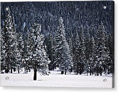 Winter Wonderland Acrylic Print by Melanie Lankford Photography