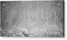 Acrylic Print featuring the photograph Winter Wood 2013 by Joan Davis