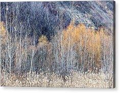 Winter Woodland  Acrylic Print by Elena Elisseeva