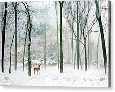 Winter Woodland Acrylic Print by Jessica Jenney