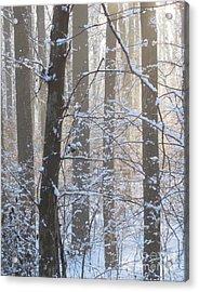 Winter Woodland Acrylic Print