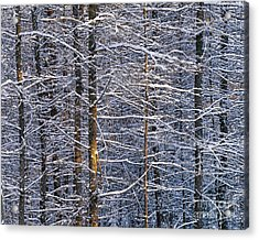 Acrylic Print featuring the photograph Winter Woods by Alan L Graham