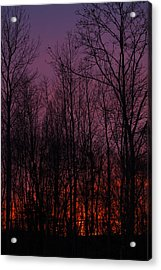 Winter Woods Sunset Acrylic Print by Karol Livote