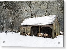 Acrylic Print featuring the photograph Winter Woolens by Robin-Lee Vieira