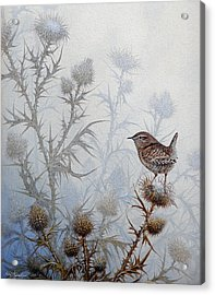 Winter Wren Acrylic Print