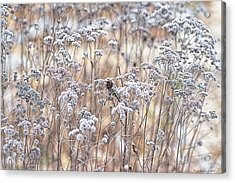 Acrylic Print featuring the photograph Winter by Yvonne Emerson AKA RavenSoul