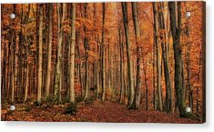 Winter\'s Soon To Come Acrylic Print by Norbert Maier