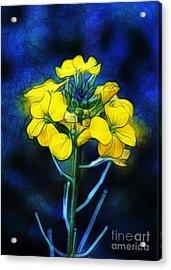 Wintercress Acrylic Print by Judi Bagwell