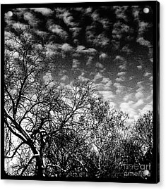 Winterfold - Monochrome Acrylic Print
