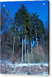 Winterforest Acrylic Print