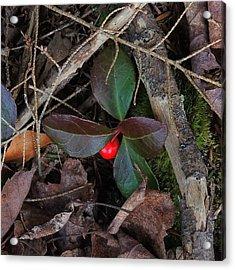 Wintergreen Acrylic Print