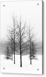 Winter's Bareness  Acrylic Print