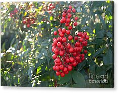 Acrylic Print featuring the photograph Winter's Berries by Lena Wilhite
