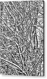 Winters Branches Acrylic Print