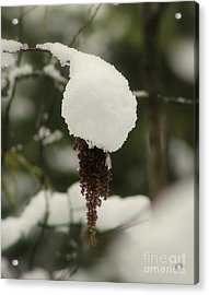 Winter's Cap Acrylic Print by Leone Lund