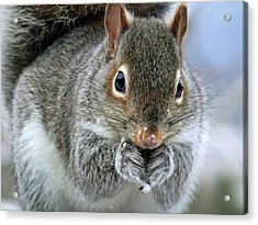 Cute Winter Squirrel Acrylic Print