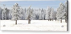 Winter's Coat Acrylic Print