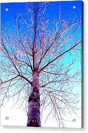 Winters Freeze Acrylic Print by Sharon Costa