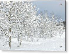 Winter's Glory - Grand Tetons Acrylic Print by Sandra Bronstein