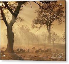 Winter's Gold Acrylic Print
