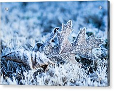 Winter's Icy Grip Acrylic Print