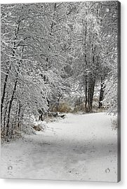 Acrylic Print featuring the photograph Winter's Kiss by Don Schwartz
