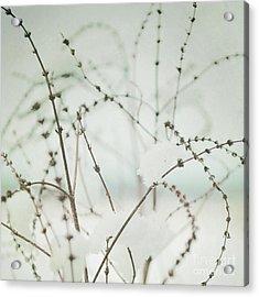 Winter's Magic Acrylic Print by Sharon Kalstek-Coty