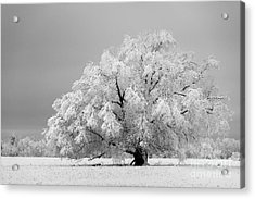 Winter's Majesty II Acrylic Print