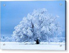 Winter's Majesty Acrylic Print