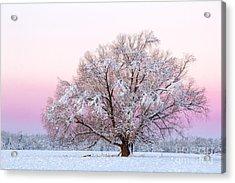 Winter's Majesty Morning Acrylic Print
